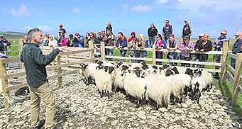 Glenkeen Sheep Farm
