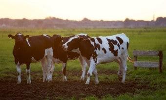 Dairy Farm Grants