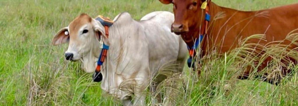 Tracking livestock