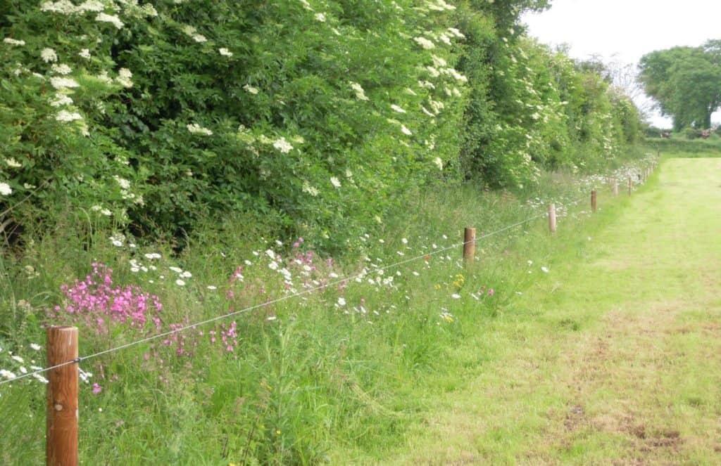 grassy margin