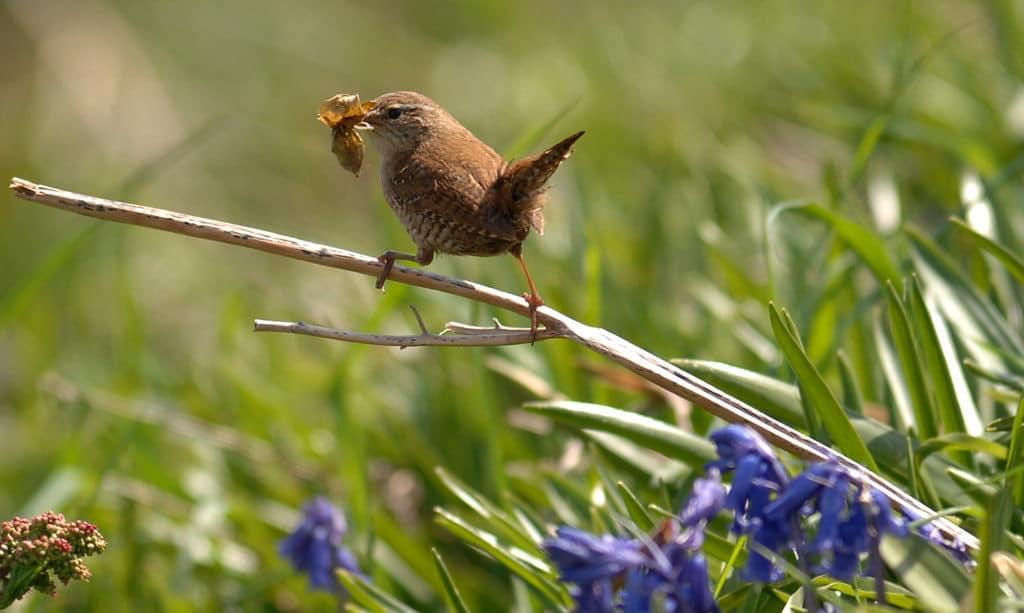 Biodiversity photo competition 2