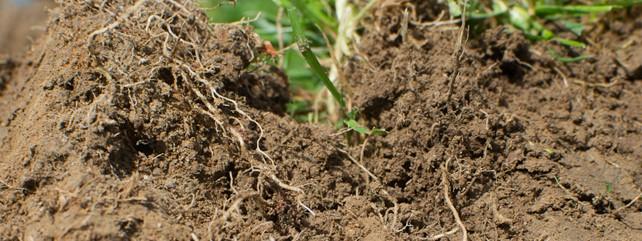 Image: Teagasc Soil Structure