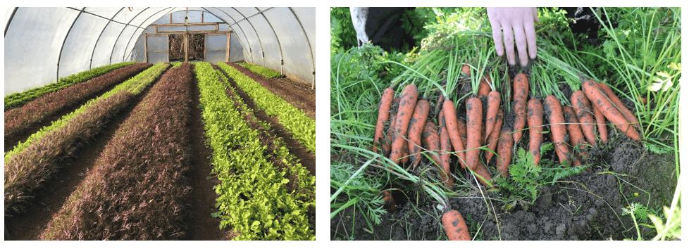 Maximising Organic Production Systems